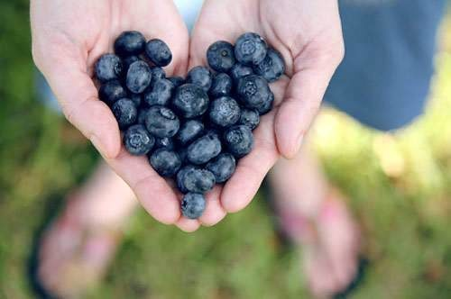 Close up of hands cupping plump blueberries